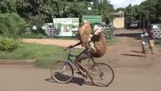 Video người và dê đánh võng trên xe đạp