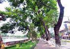 Hàng cây hẹn hò bên hồ Thủ Lệ trước giờ khai tử