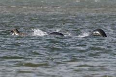 Bức ảnh rõ nét nhất về 'quái vật hồ Loch Ness'
