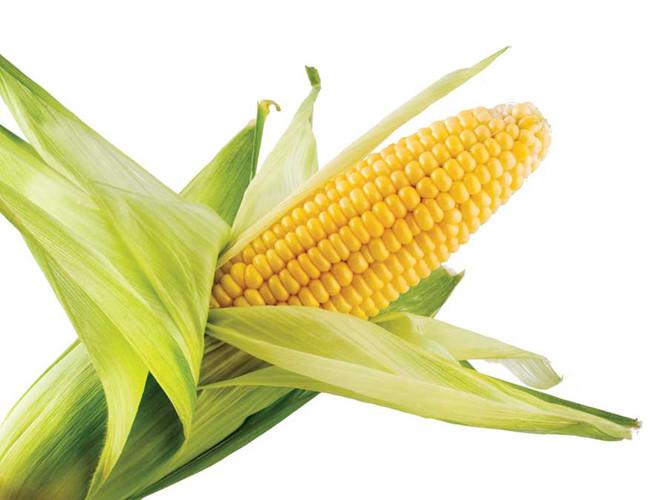 ngô, tác hại ăn ngô, không nên ăn ngô