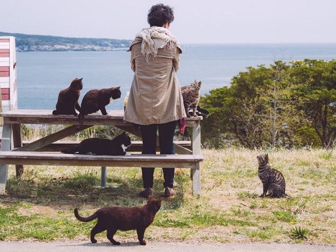 5 hòn đảo xứng đáng ghé thăm khi tới Nhật