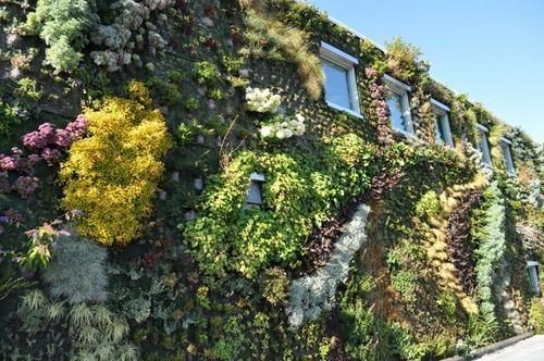ngôi nhà xanh, kiến trúc xanh, trồng cây thủy canh