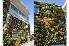 Ấn tượng ngôi nhà xanh có thảm thực vật trên tường