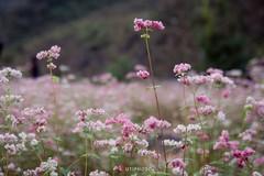 Những màu hoa trên đường phượt mùa thu