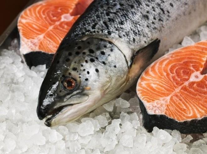 cá hồi, cá hồi nuôi, thịt cá hồi độc hại, thịt cá hồi tốt nhất, tranh cãi về thịt cá hồi, cá hồi ở mỹ, cá hồi Nauy