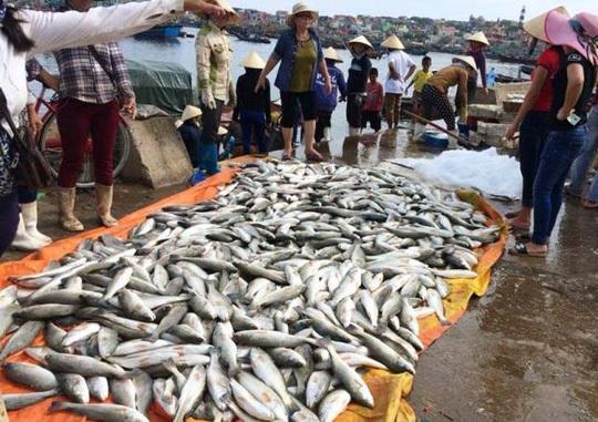 50 tấn cá chết: Bộ TN&MT lập tổ giám sát