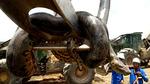 Rắn khổng lồ anaconda dài nhất thế giới vừa bị tóm gọn