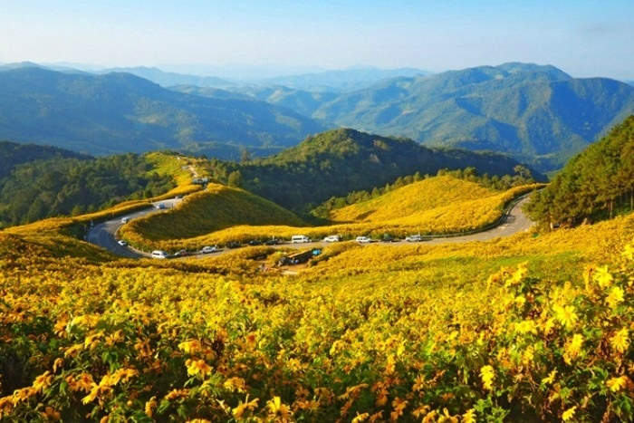 du lịch, địa điểm, tam giác mạch, hoa dã quỳ, mùa nước nổi, suối Yến