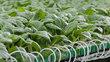 Chỉ DN mới đủ sức kết nối nông dân với thị trường