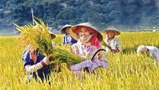 Campuchia tiến lên, Việt Nam tụt xuống