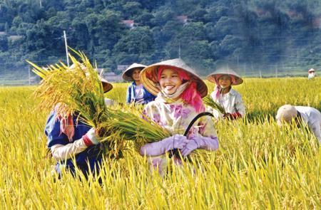 Thế mạnh nông nghiệp: Campuchia tiến lên, Việt Nam tụt xuống