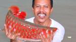 Bí ẩn loài cá thiêng vảy đỏ như máu