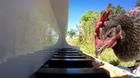 Sửng sốt chú gà chơi đàn sành điệu như nghệ sỹ