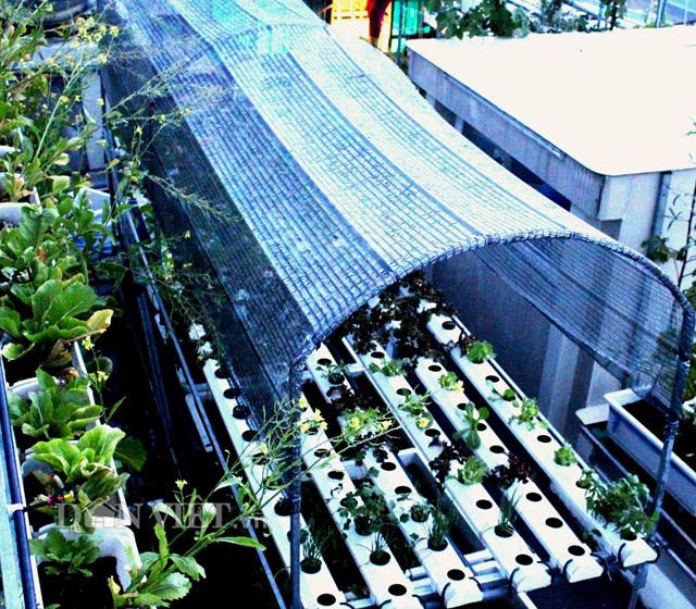 Phát ghen với vườn rau sạch trăm triệu trên sân thượng