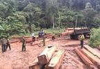 Đắk Lắk: Bắt 4 đối tượng vận chuyển gỗ lậu số lượng lớn
