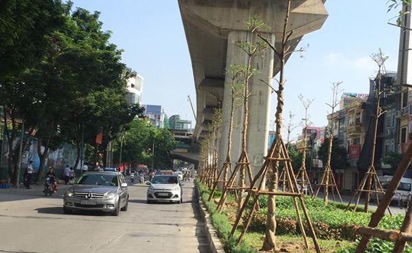 Vì sao Hà Nội trồng cây dưới gầm đường sắt trên cao?