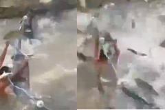 Clip 'bão cá' khiến dân mạng kinh ngạc