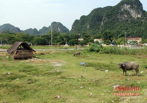 Dự án TECCO Con Cuông, dự án thành bãi thả trâu bò, dự án bỏ hoang