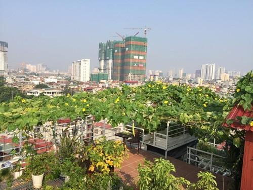 trồng rau sạch, vườn rau sân thượng, trồng rau thùng xốp
