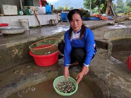 Nữ tỷ phú, ô tô, Hoàng Thị Chắp, Lào Cai, chủ trang trại, nữ đại gia, xe sang, buôn cá, cá giống