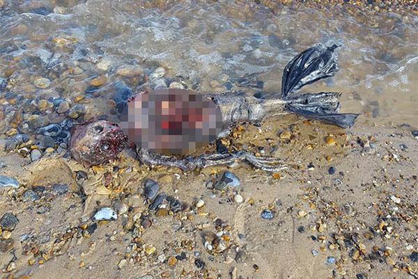 Phát hiện thi thể 'người cá' trôi dạt vào bờ