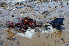 Xác 'người cá' dạt vào bờ biển chỉ là sản phẩm kinh dị?