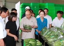 Thủ tướng thăm và làm việc tại VinEco - Hải Phòng