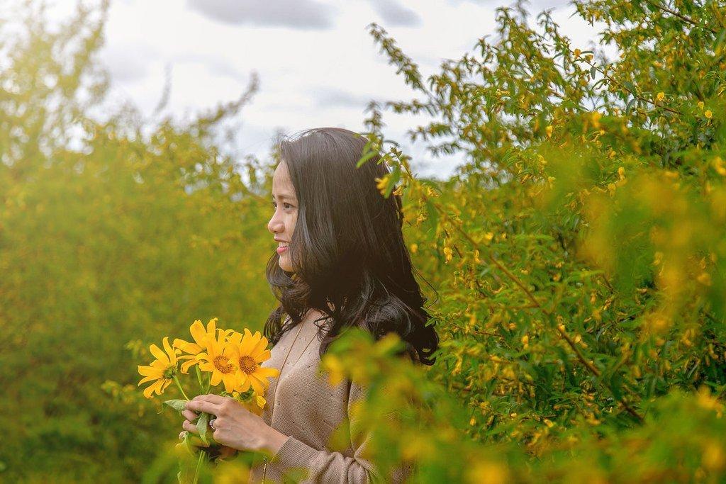 điển săn dã quỳ, hoa dã quỳ, hoa dã quỳ ở đâu đẹp nhất, hoa dã quỳ đà lạt, săn hoa dã quỳ