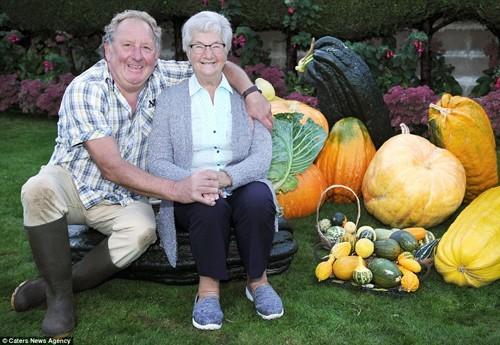 trồng rau sạch, trồng rau củ khổng lồ, vườn rau sạch