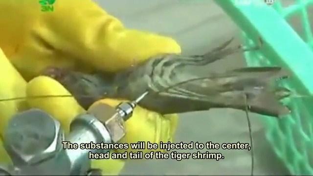 Tôm sú bơm tạp chất ở Việt Nam khuấy đảo báo nước ngoài