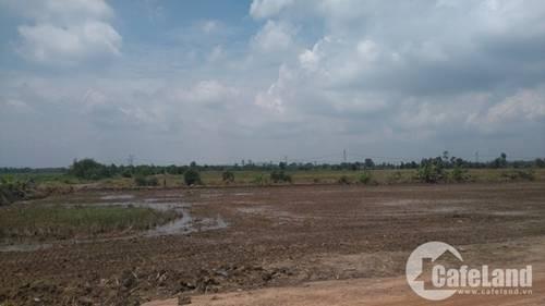 siêu dự án tỷ đô, siêu dự án thành bãi chăn bò, Tập đoàn Berjaya, dự án Khu đô thị đại học Quốc tế Việt Nam