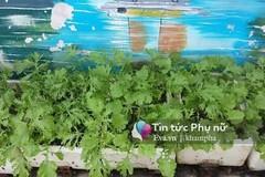 Vườn rau sạch hoa trái lúc lỉu từ xơ dừa của 8x Sài thành