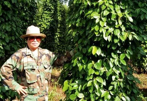 Cơ ngơi bạc tỷ, nông dân, U60, Lê Thị Kim Liên, Đăk Nông, đa canh, đa con, thị trường nông sản, trồng tiêu