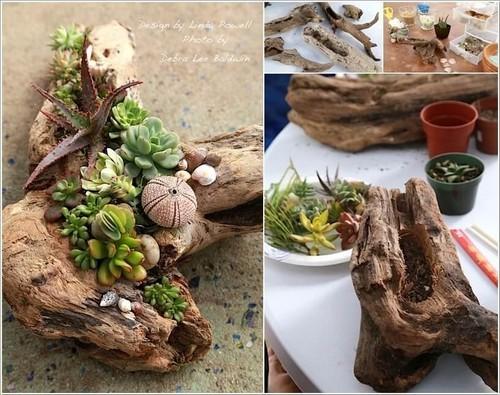 cây cảnh, cây cảnh để bàn, mẫu chậu cây đẹp