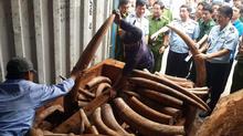 Bắt giữ 2 tấn ngà voi nhập lậu