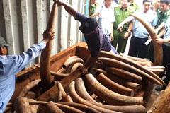 Hàng trăm khúc ngà voi nặng hơn 2 tấn giấu trong lô gỗ 'đục rỗng ruột'