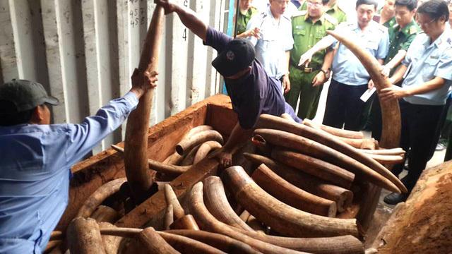 container, khai báo là gỗ xoan đào, châu Phi, ngà voi, hàng trăm tỷ, cảng Cát Lái, hải quan, nhập lậu, buôn lậu, quý hiếm