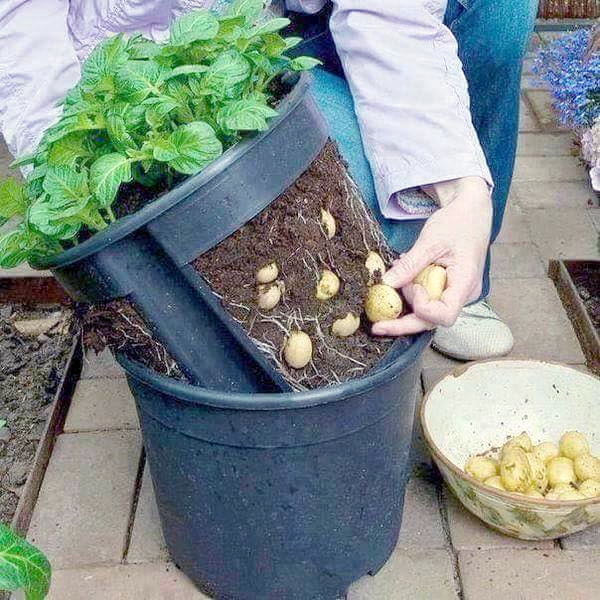 Vườn rau sạch trong ống bơ, chai lọ, lốp xe... đẹp hiếm thấy