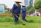 Hà Nội lại rộn ràng cắt cỏ sau 3 tháng