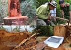 Nghệ An: Khởi tố vụ phá rừng pơ mu