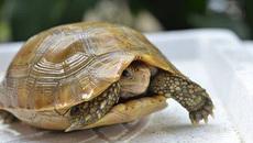 Bị rùa cắn trúng chỗ 'nhạy cảm'