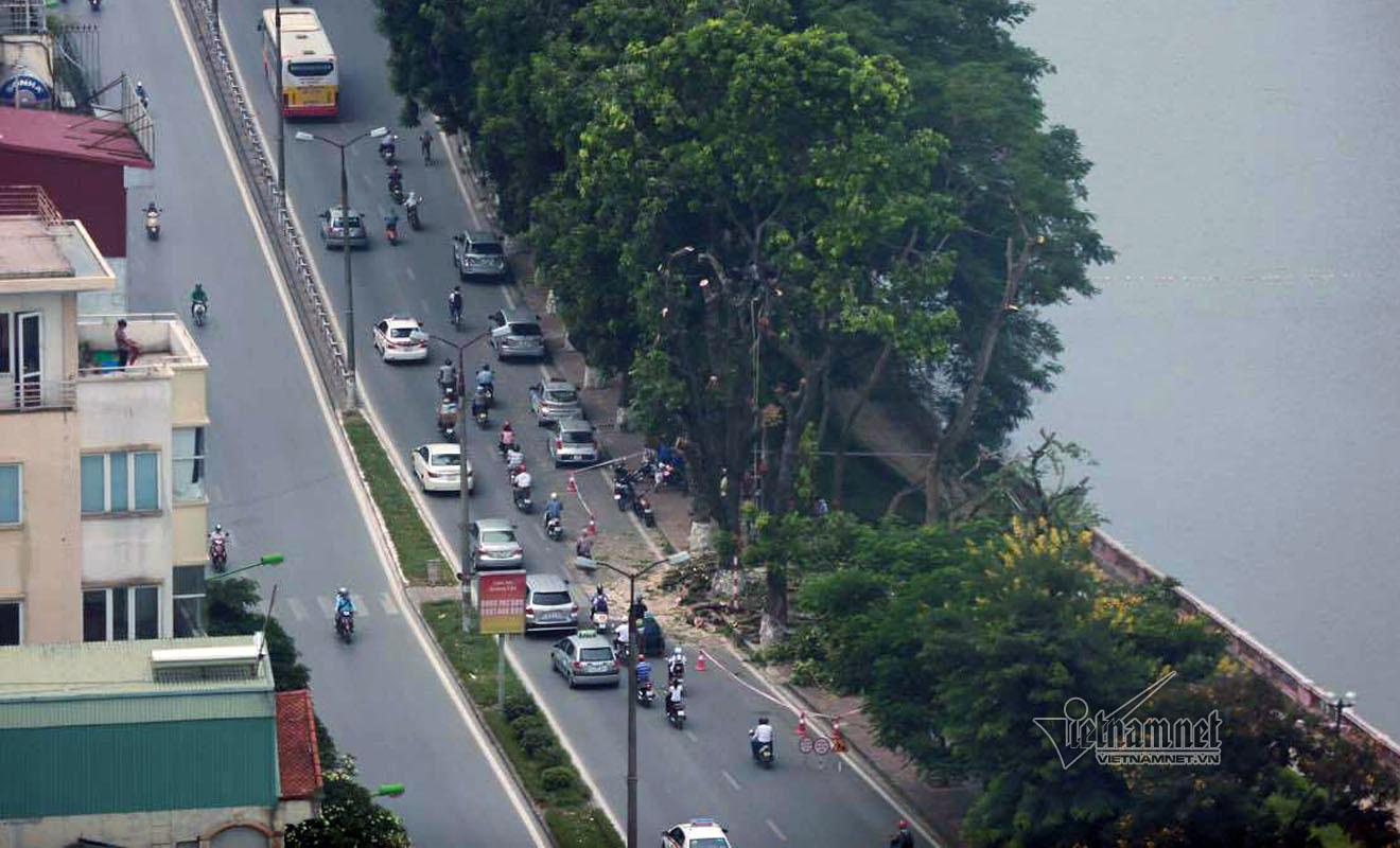 Hà Nội: Đại di dời cây xanh phố Kim Mã