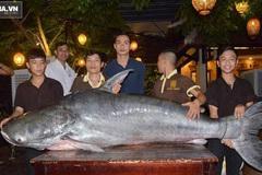 Cá tra 200kg được nhà hàng ở Đà Nẵng mua giá 400 triệu