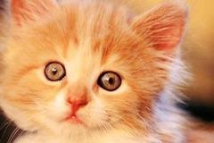 Tuổi mèo mềm mại nhưng khó đoán, nếu có người quen tuổi này cần chú ý điểm sau