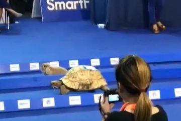 Kết quả ngỡ ngàng khi thỏ thi chạy với rùa