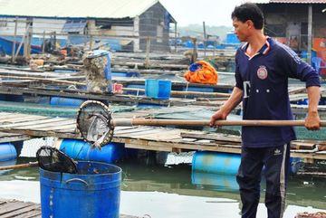 Vụ dân Vũng Tàu chặn quốc lộ: 65 tấn cá chết, thiệt hại 6,4 tỉ