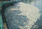 Hồ Tây được cảnh báo ô nhiễm kim loại nặng cách đây 4 năm