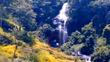 Quái vật khổng lồ xuất hiện ở thác nước trong rừng?
