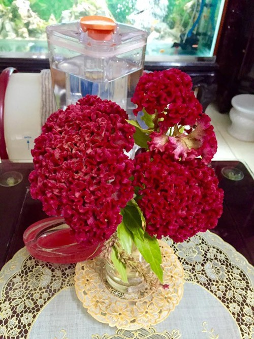 ngày 20/10, cách cắm hoa đơn giản, cách cắm hoa hồng, trang trí nhà đẹp