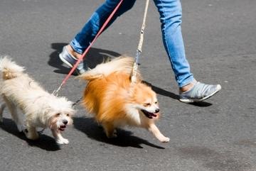 Tranh cãi gay gắt chuyện dắt chó ở phố đi bộ